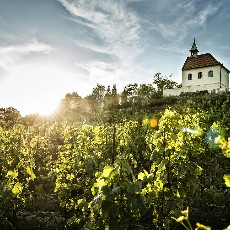 The Golden Age of wine in Prague