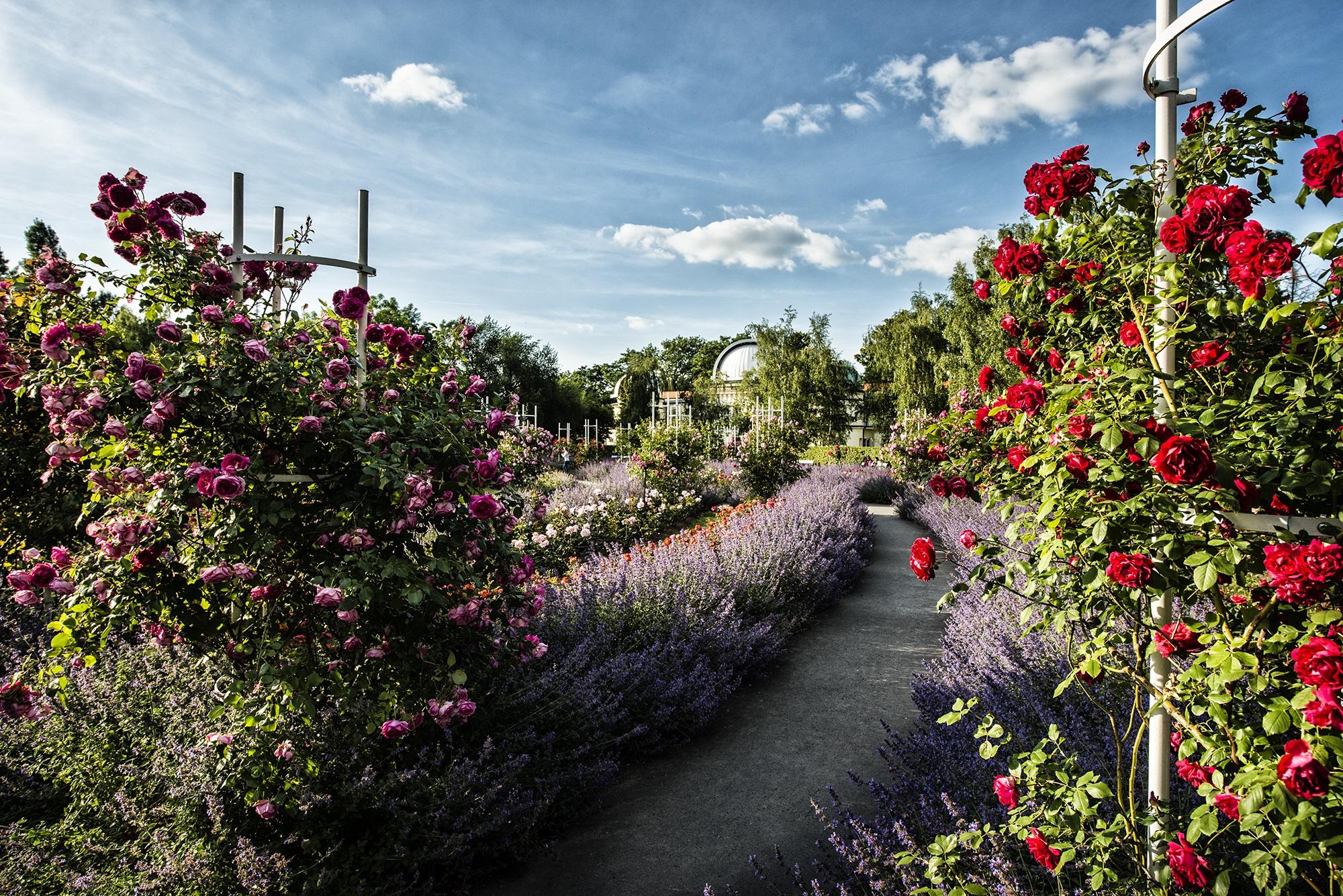 Pet n gardens pet nsk sady for Garden giardini